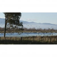 On the wing: Plenty of birds at the Wairio wetland.
