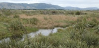 Otaki River: Water birds and other wildlife are benefiting from  estuary restoration  efforts.