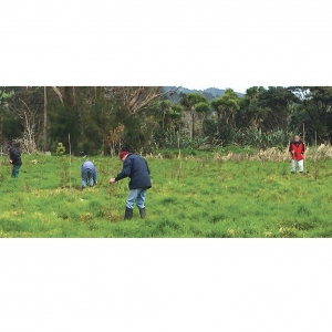 Trees going in: Rotary International's call to plant a tree to mitigate against Global Warming was taken up by a group of local Rotarians who managed to do far better than just one tree and included 20-30 large sized kahikatea and pukatea.