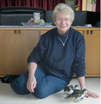 Bundles of fluff: Keeping Judy Fentress busy this hatching season.