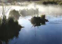 Duck shoot: Misty morning at Lake Huritini – spot the dog.